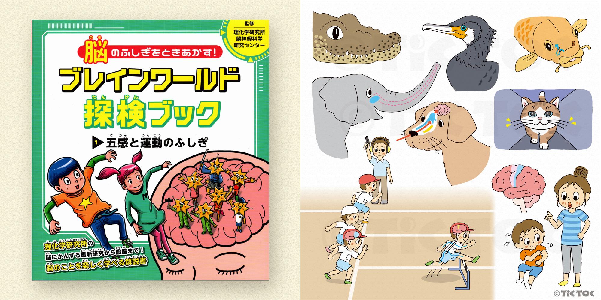 脳のふしぎをときあかす! ブレインワールド探検ブック 第1巻 五感と運動のふしぎ(文研出版)
